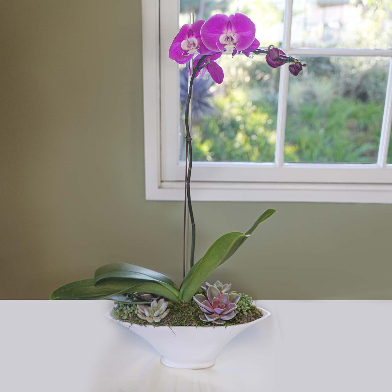 Orchid Workshop Low Res