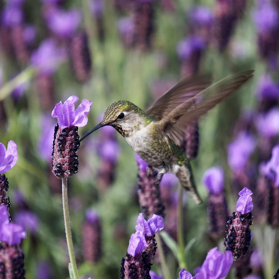 Bird & Butterfly Garden