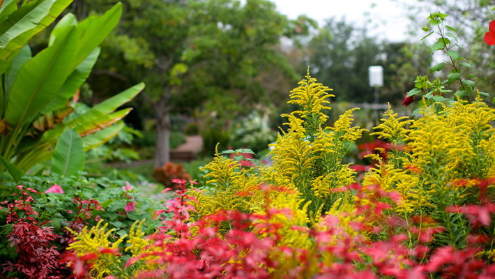 Autumn Pops of Color for your Garden