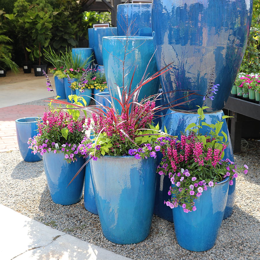 Designing & Selecting the Best Plants for Container