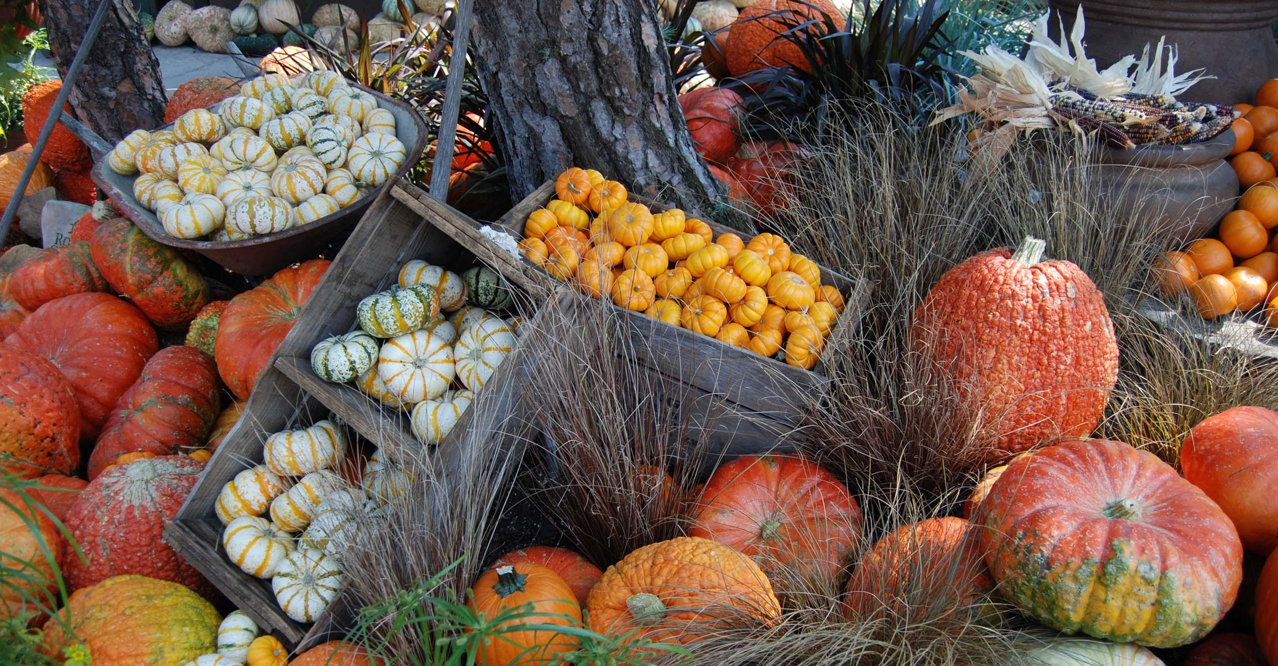 pumpkins_banner